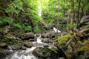Waterfalls and Big Spruce – Trails to Ales in Cape Breton