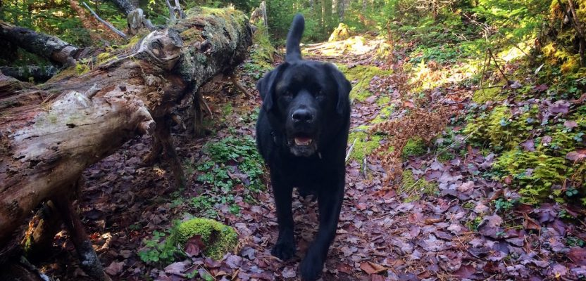Nova Scotia Hiking Trail Guide