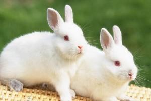 #FNHangout – Hop Like A Bunny