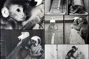 Episode 19 – Monkeys loose in a lab from a cocaine experiment